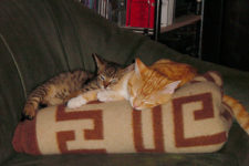 cats200103