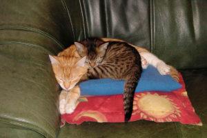 cats200109