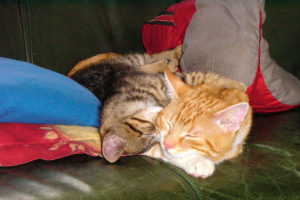 cats200110