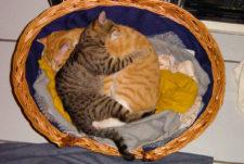 cats200111
