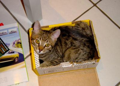 cats200210