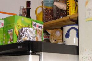 cats200211