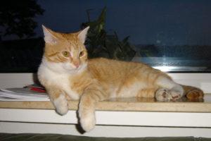 cats200212