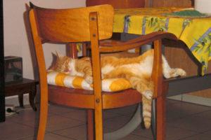 cats200214