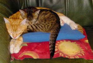 cropped-catsfirst-1.jpg