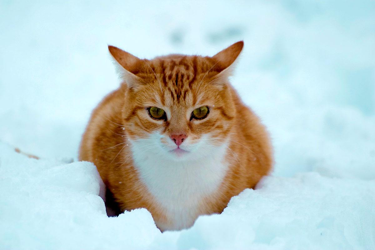 shervan snow