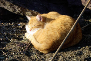cats20033