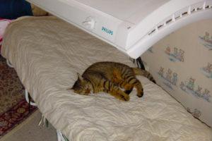 cats20035