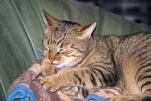 cats20036