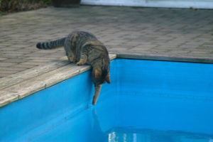 cats20038