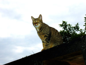 cats20043