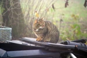 cats20045