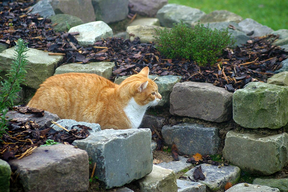 cats20046