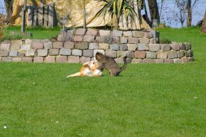cats20051