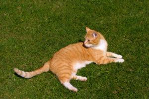 cats20052