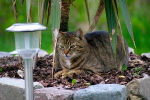 cats20053