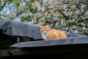 cats20054