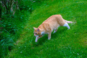 cats20056