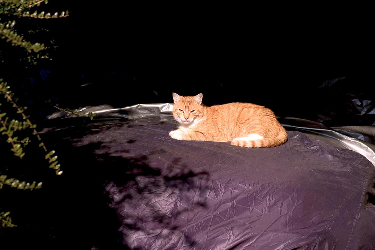 cats20061