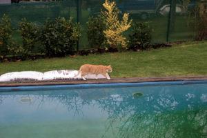 cats200610