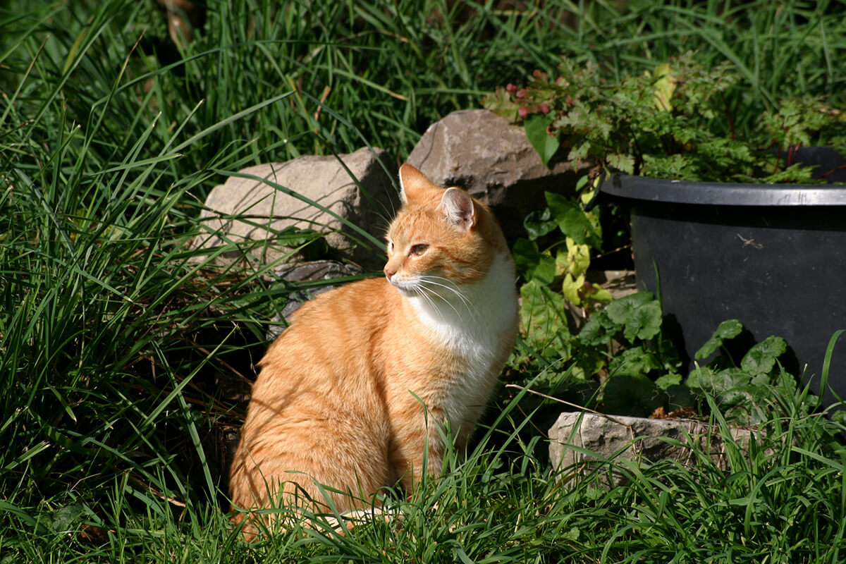 cats200614