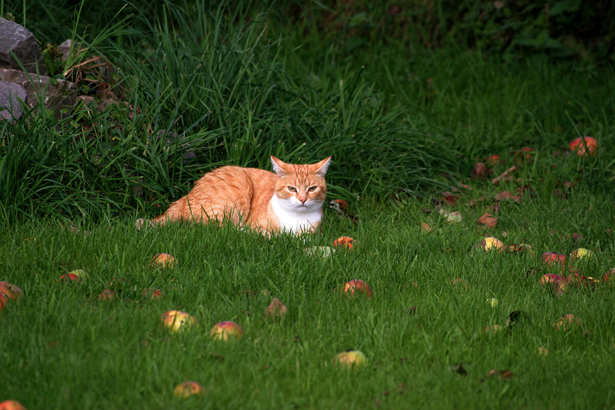cats200615
