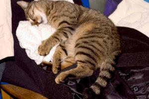 cats20062