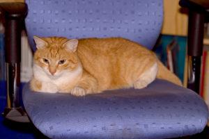cats20063