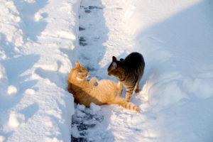 cats20064