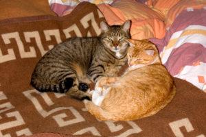 cats20065