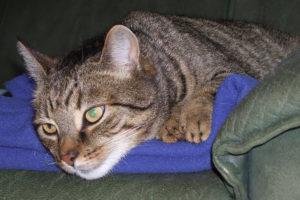 cats20066