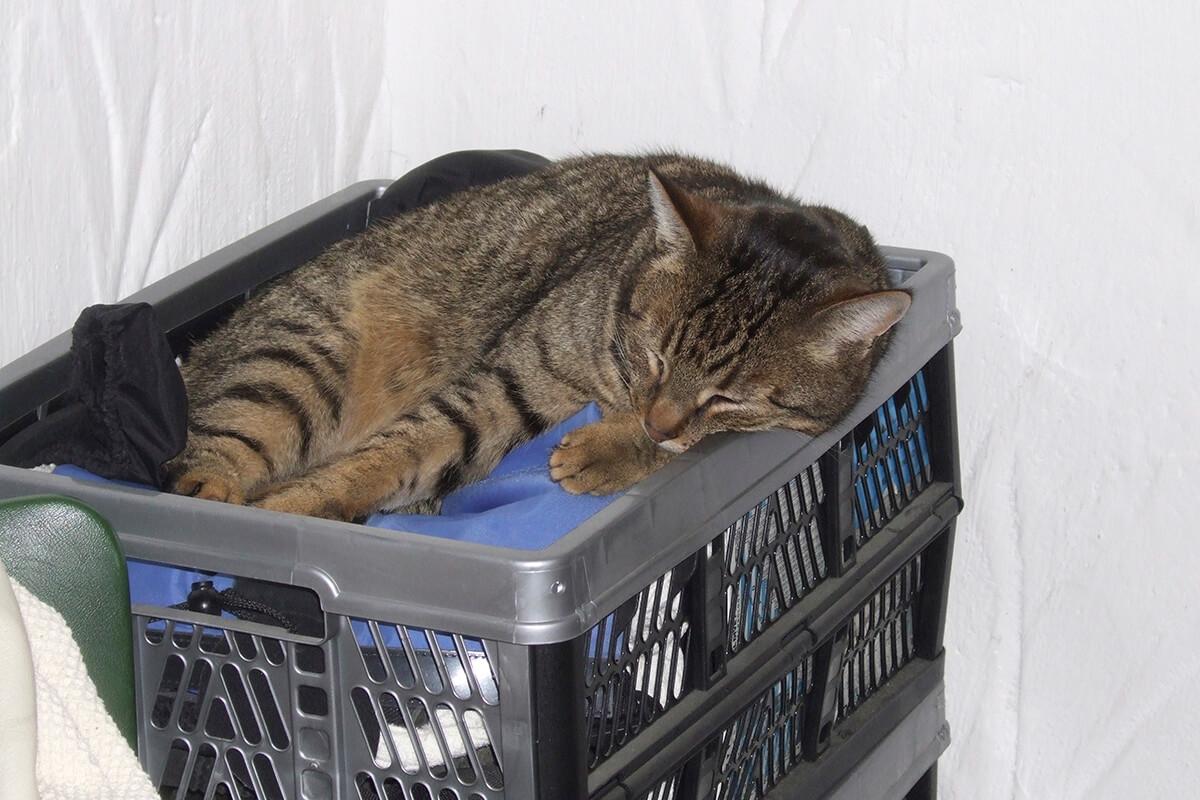 cats20067