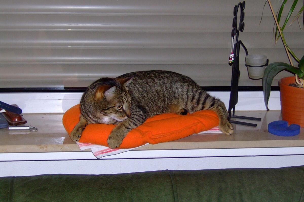 cats20068