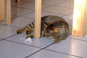 cats20069