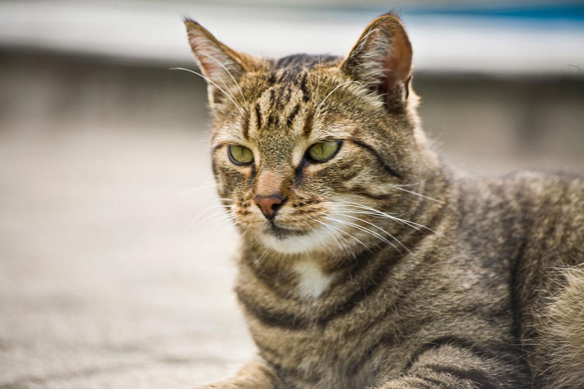 cats20071
