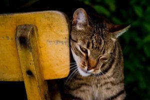 cats200711