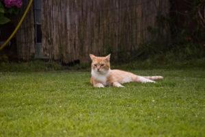 cats200713