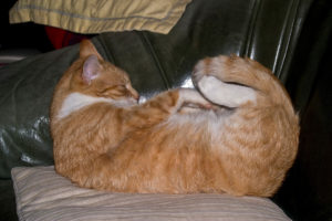 cats200716