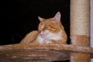 cats200717