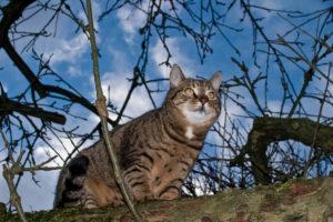 cats200718