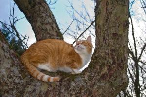 cats200719