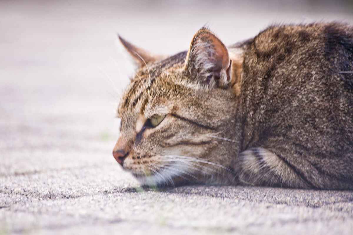 cats20073