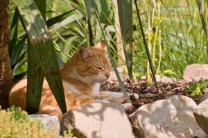 cats20077