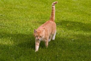 cats20078