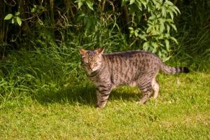 cats20079