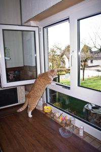 Shervan nutzt das Küchenfenster