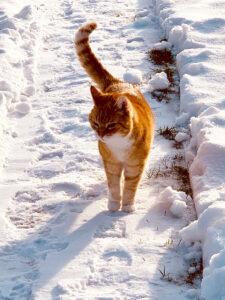 Shervan im Schnee